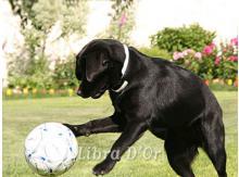 ...и начинает уводить мяч к воротам противника