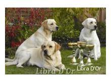Лотто, Гермиона их дочь, и Леди