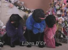 Libra D'OR Fashion Federation & Libra D'OR Famous Person Galileo & Libra D'OR Flaming Star