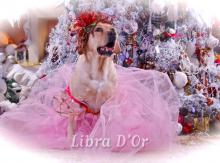 Libra D'OR Wonderful My Fair Lady