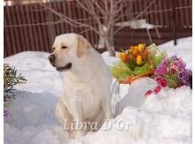Libra D'OR Windsor Royal Oak- Рей и цветы