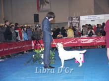 Libra D'OR Dior Show Princess ЛЮ