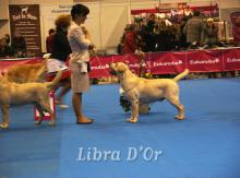 Libra D'OR Magic Showman
