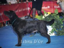 Libra D'OR Blues The Most
