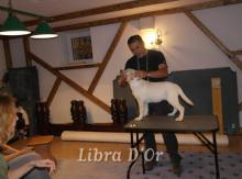 Обучение работе в питомнике со щенками лабрадора.  Тренинг HUGO QUEVEDO all breed handling.